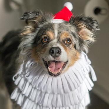 Merry Christmas from Gordie