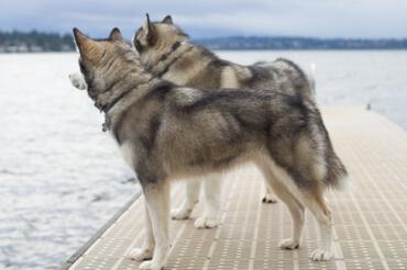 Kodi and Maggie