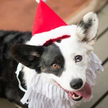 Happy Holidays from The Waggly Tail