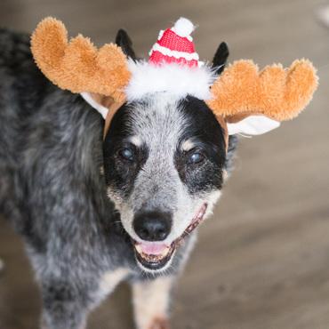 Merry Christmas from Ursa