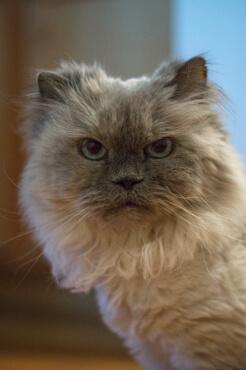 The next grumpy cat
