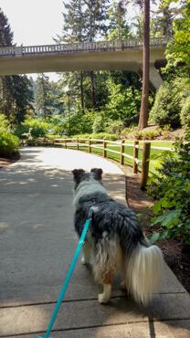 Gordie on a walk